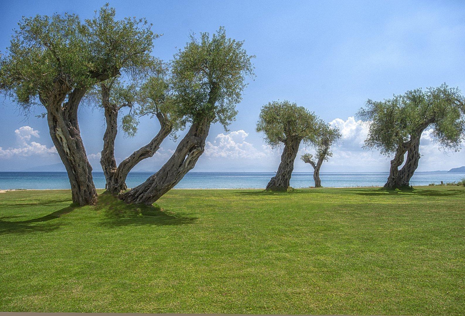 domes-miramare-corfu-a-luxury-collection-resort-genel-0012